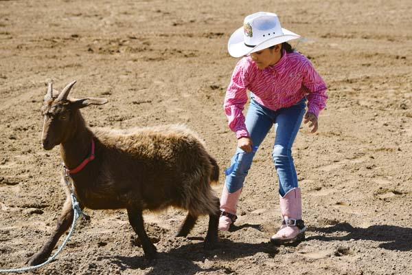 Luna Kathryn Tyrel competes in goat undecorating — she won the kindergarten-to-2nd grade division title with a time of 11.95 seconds. EMY FERGUSON photo