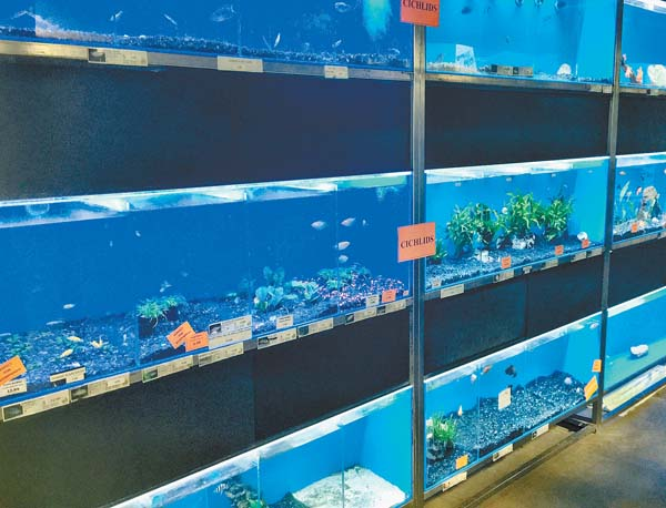 Tropical fish aquariums -- Photo courtesy The Pet Shop