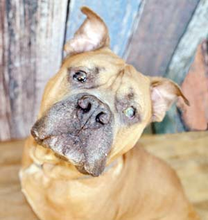 Hooch is the larger-than-life lover boy that would love to see you. -- RUBY HERNANDEZ photo