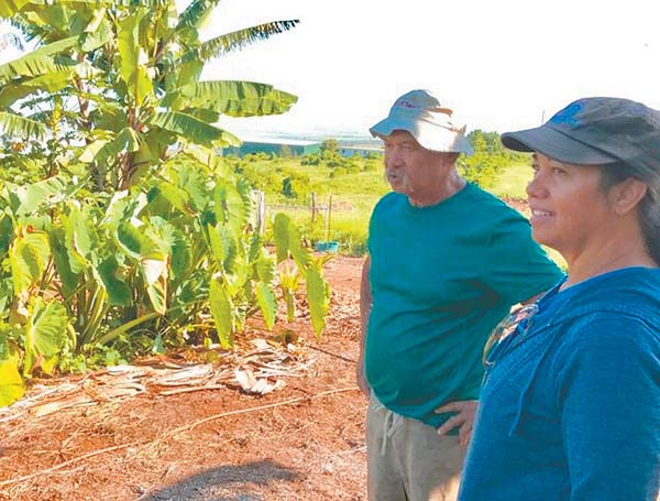 Cheryl Moore and Norman Abihai view dryland taro recently at Abihai's Waiohuli homestead. Moore will discuss Waiohuli archaeology at a free mini-lecture 11 a.m. Saturday during the Keokea Farmers Market. Pa'upena CDC photo