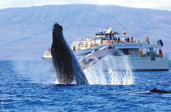 February is the height of Maui's humpback whale season, and spectacles from the daily Pacific Whale Foundation cruises occur with regularity. -- Pacific Whale Foundation photo