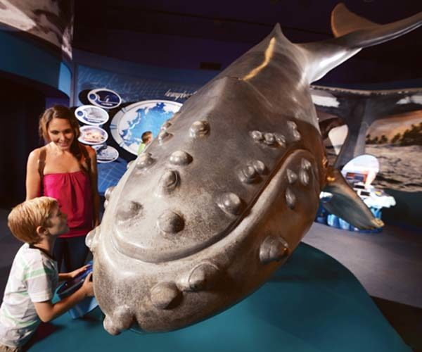 Learn all about the humpback whales at the fun Marine Mammal Discovery Center with interactive displays and much more. -- Maui Ocean Center photo