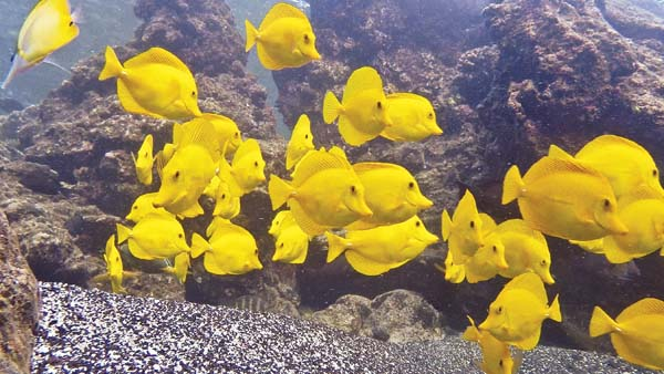 oahu court invalidates state issued permits to collect tropical fish