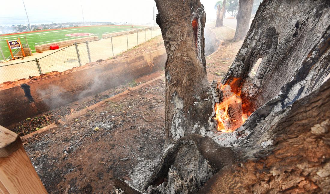 maui fire - photo #33