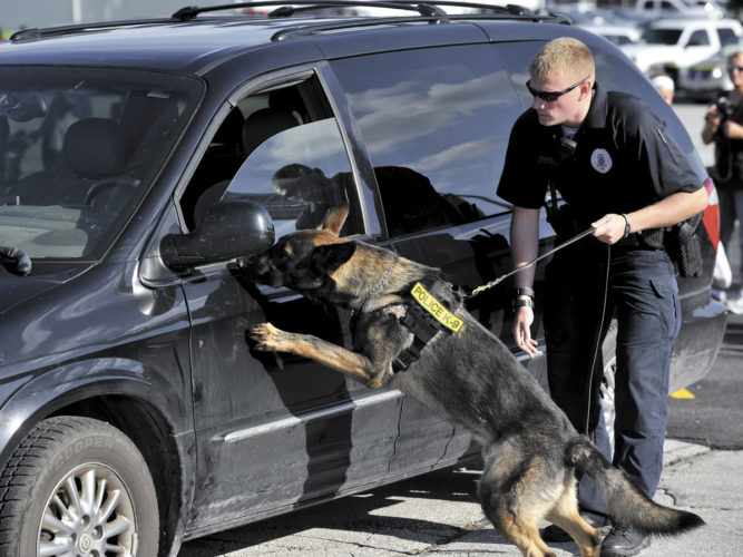 -Messenger photo by Hans Madsen  Abram, the Fort Dodge Police Department's new canine, locates a hidden stash of drugs in a vehicle  during a demonstration with his partner, patrol officer Troy Kleppe during the 11th annual Night Out and Back to School Bash held at the Crossroads Mall in 2016.