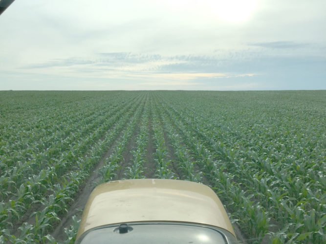 -Photos by Larry Kershner  This is a view of Darren Fehr's 2016 cornfield during a cultivation run over the fields. The dark green color is an indication of how rich the soil is in nitrogen.