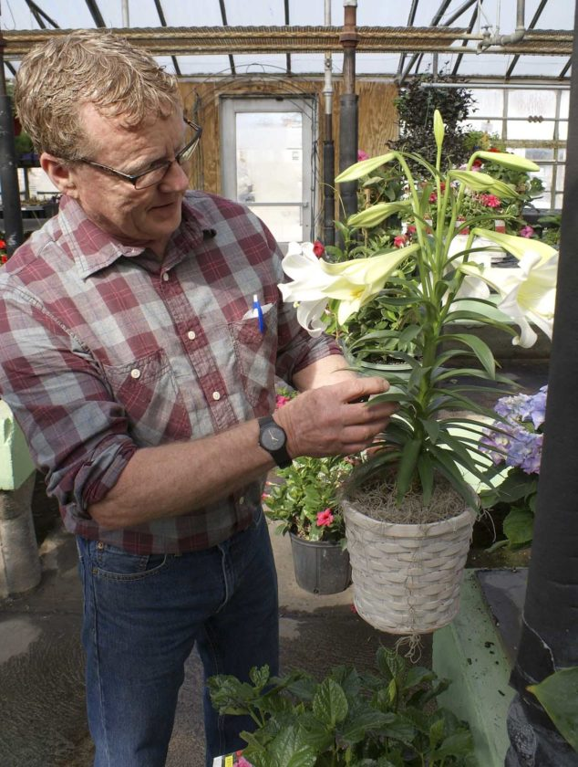 -Messenger photo by Dawn Bliss Jeff Becker, of Becker Florists and Garden Center, prepares an Easter lily from the greenhouse for a customer. Easter lilies are easy to care for and can be planted outside as a perrenial bulb once its blooms are finished.