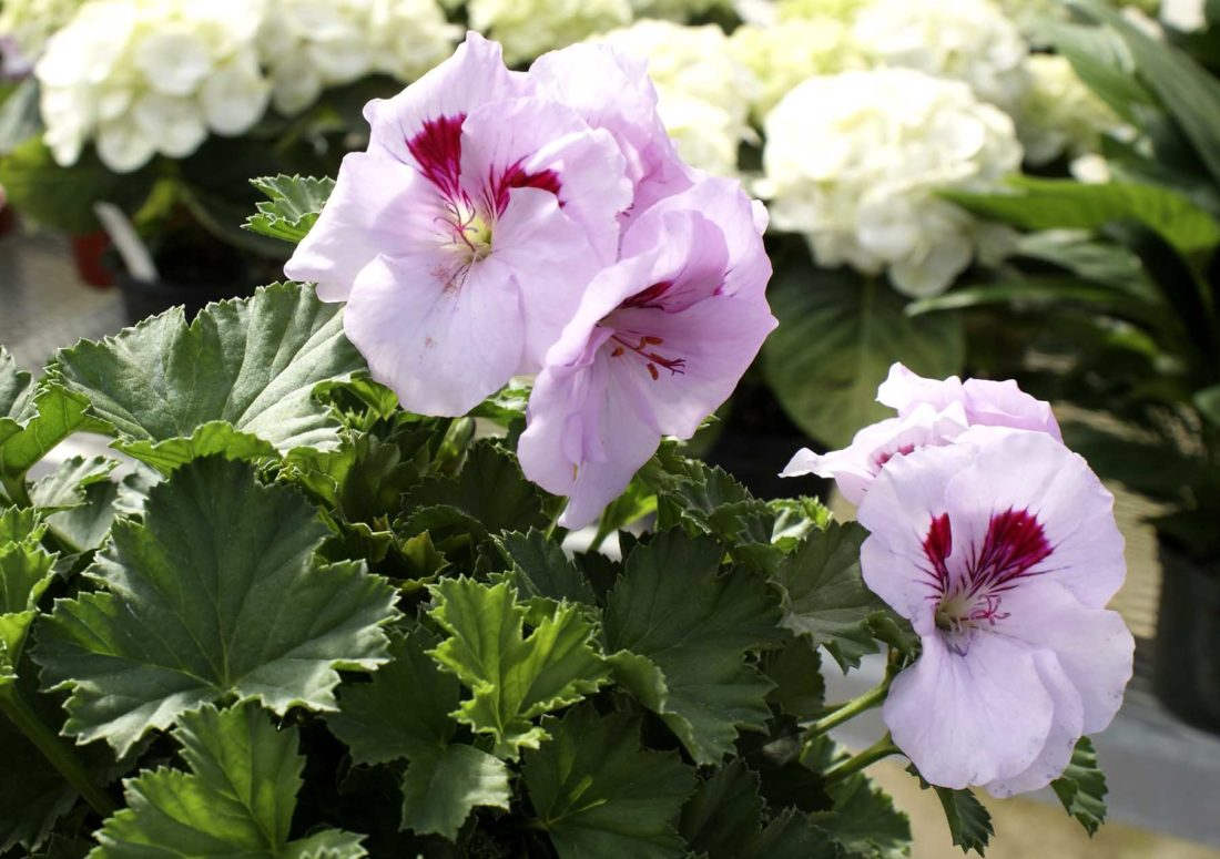 -Messenger photo by Dawn Bliss