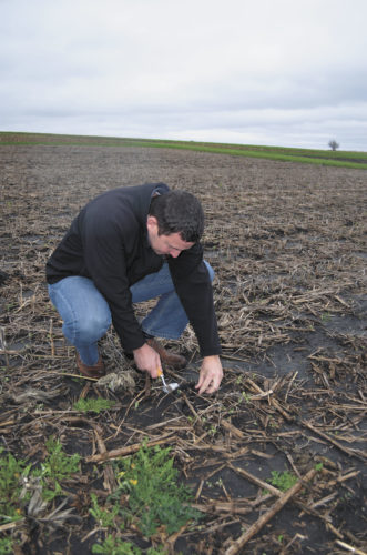 -Messenger photo by Kriss Nelson  Mark Licht, assistant professor and Iowa State University Extension cropping systems specialist, checks plant growth for corn at the Field Extension Education Laboratory field near Ames.