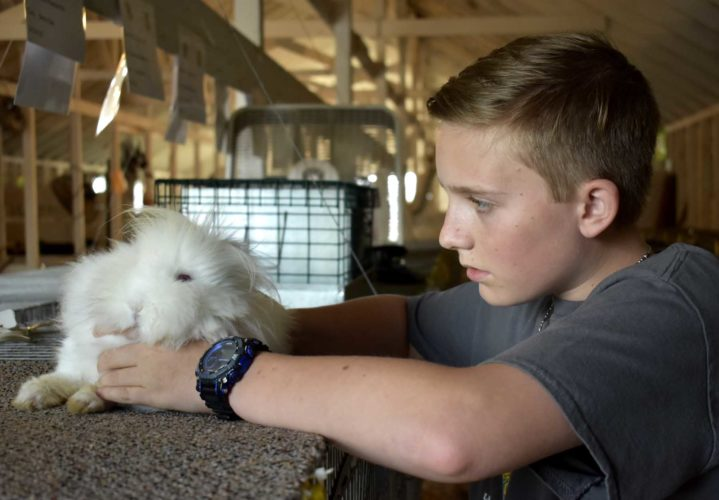 -Messenger photo by Chad Thompson  Ryan Fink, 14, of Belmond, holds his rabbit, Lacy, at the Wright County Fair Thursday afternoon. Fink is in the 4-H club, Britt Broncos. He said care is the most important part of showing rabbits.