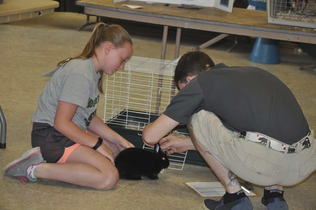 -Messenger photo by Peter KaspariHailey Rees, 11, a member of the Washington Winners 4-H club, sits beside her rabbit, Thumper, as pet project judge Jake Shelton examines the rabbit. Rees ended up winning the fan favorite award.