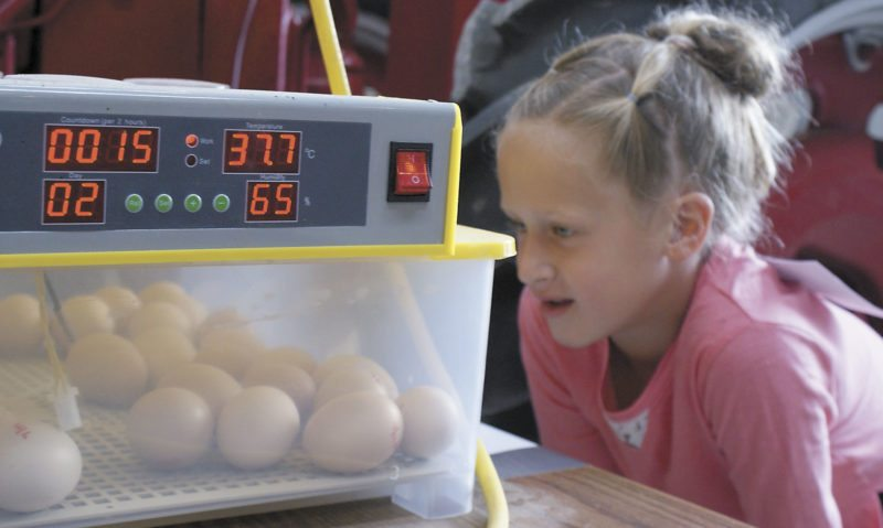 -Messenger photo by Dawn Bliss  Taylor Parsons, of Bancroft, studies eggs in an incubator in the Kossuth County Agriculture Education Center Thursday during the Kossuth County Fair in Algona. Parsons was waiting to see if a chick would hatch.