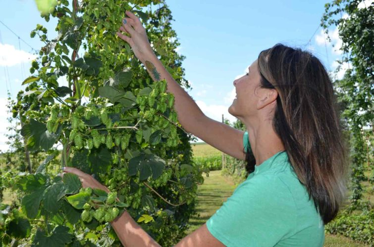 -Messenger photo by Kriss Nelson  Lacy Mason checks her hops crop. Her and her husband, Justin, own and operate Hope Ave. Hops near Odeboldt.