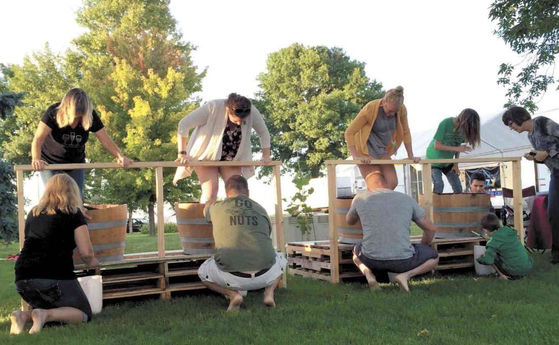 "-Submitted photo  Teams work together in the grape stomping contest in the 2016 Good ""Vine""brations Harvest Festival."