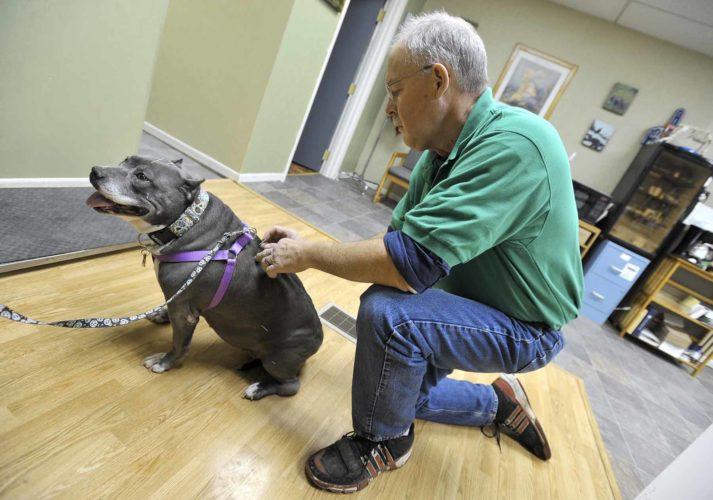 -Messenger photo by Hans Madsen  Dr. Bruce Towne, owner of Towne Veterinary Clinic in Gowrie, begins an accupuncture treatment on Chloe, a pitbull who's human, Judy Schrad, of Lake City, has been brining her in for regular treatments.