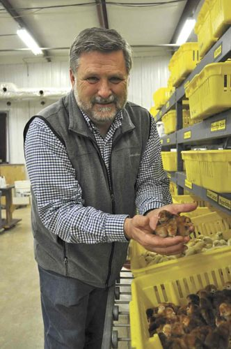 -Messenger photo by AdriSietstra  Bud Wood, president of Murray McMurray Hatchery in Webster City, holds a small sampling of the first hatch of 2018.