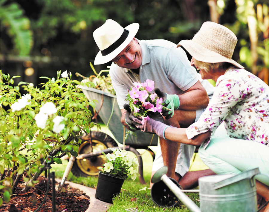 7 tips for summer gardening news sports jobs the for Gardening tools you need
