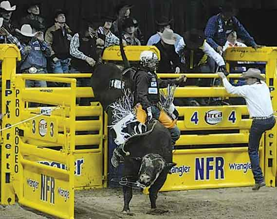 Submitted Photo  Audiences can witness 25 fearless bull riders compete against high bucking bulls during the Western Bull Riding Championships.