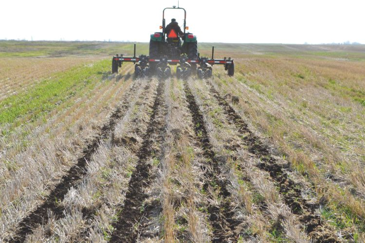 SubmittedPhoto  Strips are tilled for row crop seeding at North Central Research Extension Center. A new planting technique, strip tilling, is designed to warm soil while preserving moisture.