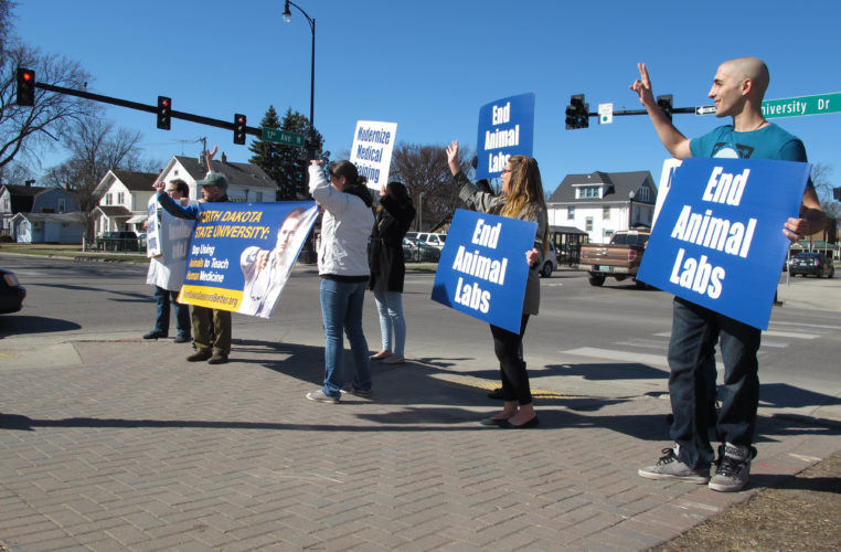 Demonstrators gathered across the street from the North Dakota State University campus in Fargo wave at a honking motorist during the Thursday, April 6, 2017, event meant to protest the school's use of live animals in its trauma training course. The event was organized by the Physicians Committee for Responsible Medicine, which has offered to pay for a surgical simulator if the school stops the practice of using live pigs in the course. (AP Photo/Dave Kolpack)