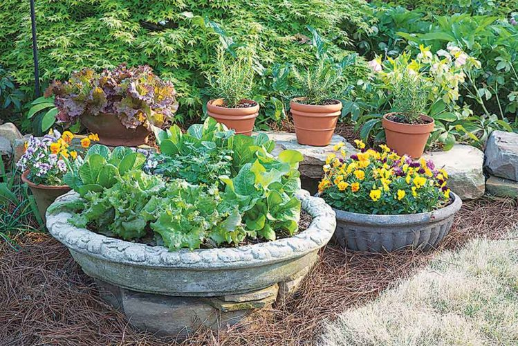 Submitted Photo  Container gardens are an easy way to incorporate color, edibles and interest into the landscape, shown in this photo from Bonnie Plants.