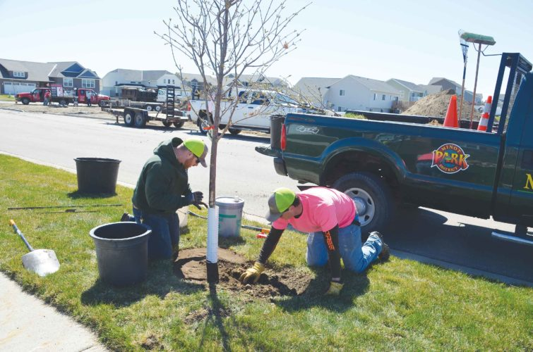 Kory Houston, left, and Mitch Thompson, of the Minot Forestry Department, have the ivory silk lilac in place on a boulevard in northwest Minot and complete the planting, Thursday. The tree planting is part of the Minot Forestry Department's annual Boulevard Tree Planting Program.  Eloise Ogden/MDN