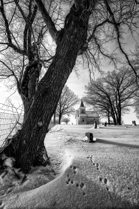 """SubmittedPhoto  """"Have You Seen a Rabbit?"""" by Minot photographer Erich Linser earned first place in the monochrome division."""
