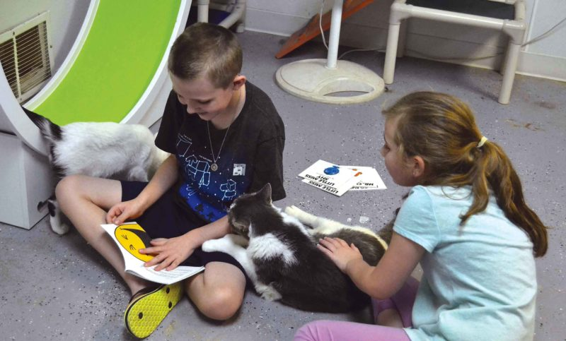 Submitted Photo  Children read to feline friends at the 'Kitty City' located in the Souris Valley Animal Shelter.