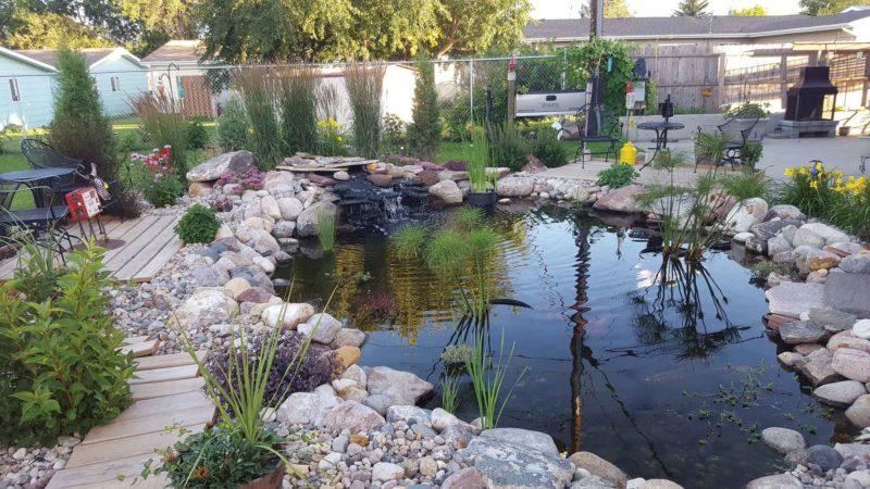 Pond-pic
