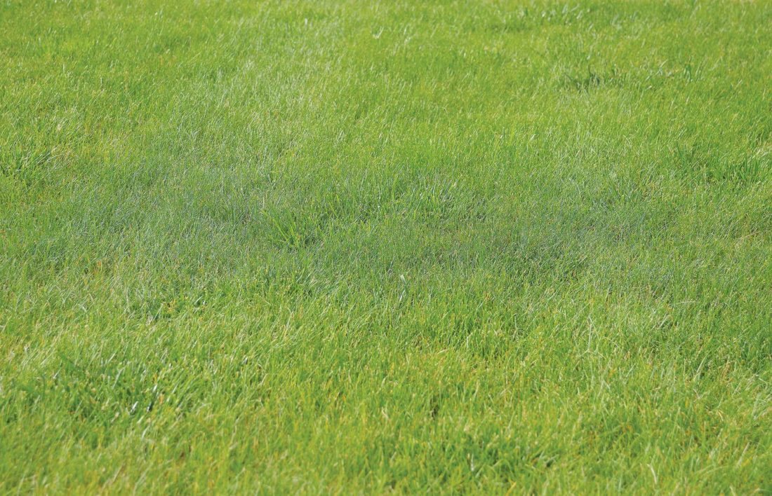 Eloise Ogden/MDN Mowing grass around 4 inches high and mulching will help lawns suffering during a drought as well as other times.