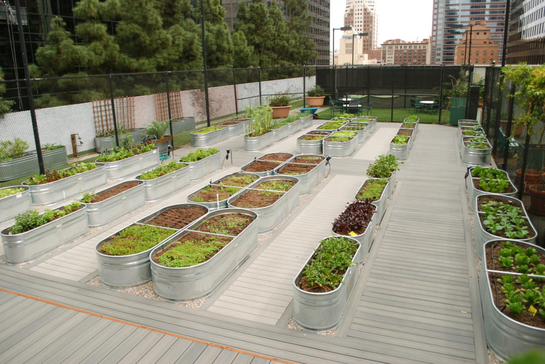This February 2014 photo provided by Farmscape shows a rooftop garden at Jonathan Club in downtown Los Angeles.(Lowell Frank/Farmscape via AP)