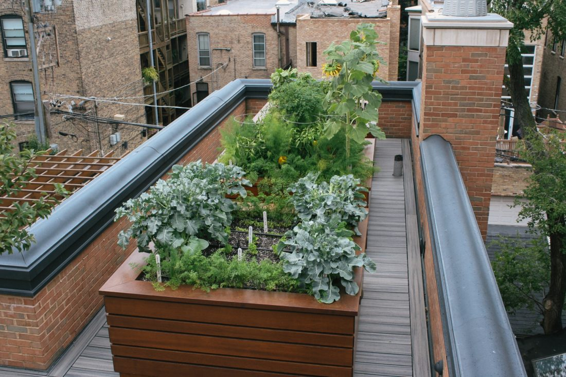 This 2016 photo provided by The Organic Gardener shows a rooftop garden in Chicago, Ill. (The Organic Gardener via AP)