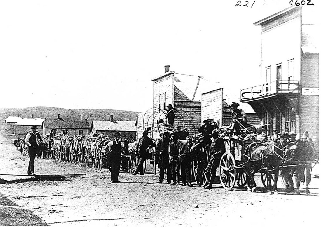 File Photo Wagons are loaded with buffalo bones on Main Street looking south in Minot. Minot was the main concentration point in the late 1800s for loads of buffalo bones picked up on the prairie by the settlers to bring to town to be exchanged for cash.
