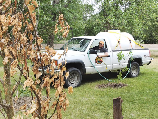 Kim Fundingsland/MDN Applying sufficient water to keep plants green this summer has become nearly impossible due to record dry conditions. Minot Parks are doing their best to keep parks green wherever possible despite difficulties associated with drought conditions.