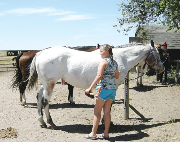 Andrea Johnson/MDN Ali Gross, 10, from Gackle, brushes her horse at the Triangle Y Camp southwest of Garrison on June 28.