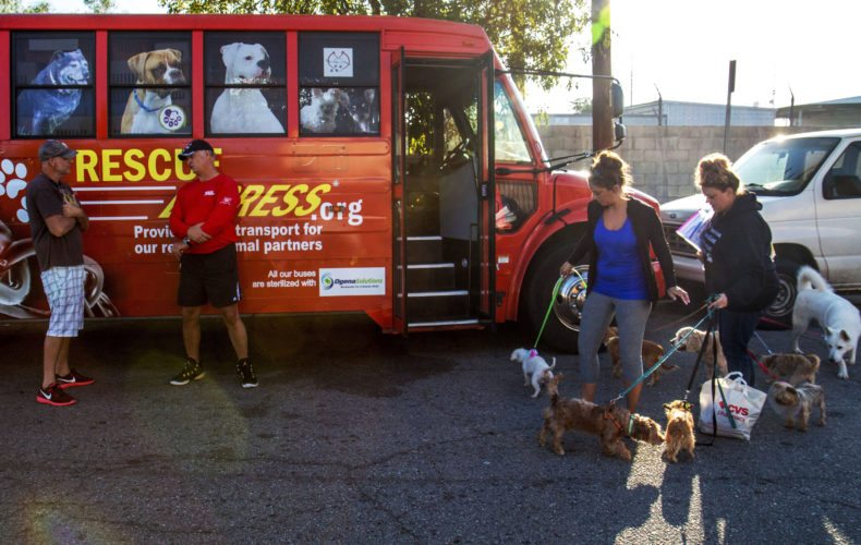 In this July 22, 2017, photo, people wait to load animals onto the Rescue Express bus at the first stop in San Fernando, Calif. For almost three years, Rescue Express, a Eugene-based organization headquartered on a farm off McBeth Road, has functioned as an escape vehicle for cats and dogs that had been living in overcrowded California shelters, where they were under threat of being euthanized for lack of space to keep them. (August Frank/The Register-Guard via AP)