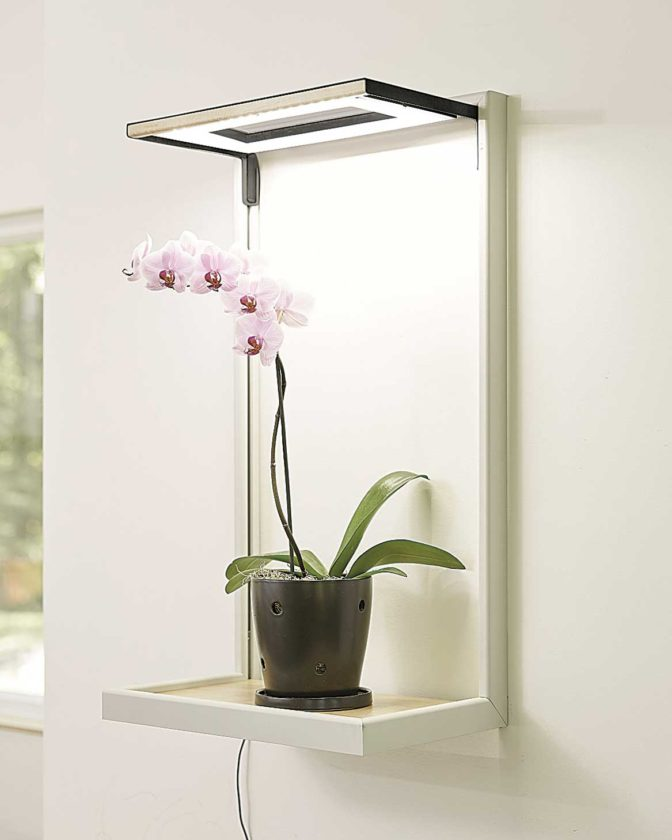 Submitted Photo Orchids, shown in this photo from Gardener's Supply Co., do best with 12 to 14 hours of sunlight and indoor light systems can help supplement the amount of light needed for the plants to thrive.