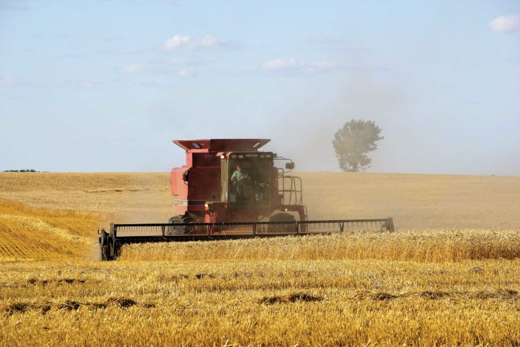 A combine finishes up a field west of Minot Aug. 21.  Jill Schramm/MDN
