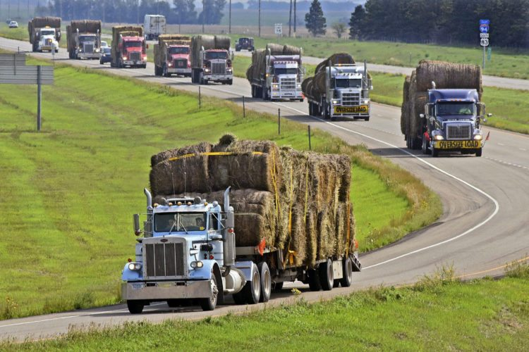In this Aug. 26, 2017 file photo, driver Tim Drechsel and friend Ember Daley lead a long lineup of trucks as Operation Hay Lift Convoy pull off of I-94 at Menoken, N.D. The 13 trucks sponsored by Farm Rescue and Beyer Towing of Fergus Falls each carrying 34 bales of hay were destined to drought stricken farms and ranches in western North Dakota. North Dakota-based Farm Rescue, which expanded into its sixth state earlier this year, is helping its 500th case this week amid the most devastating drought in the Northern Plains in decades. (Tom Stromme /The Bismarck Tribune via AP, File)