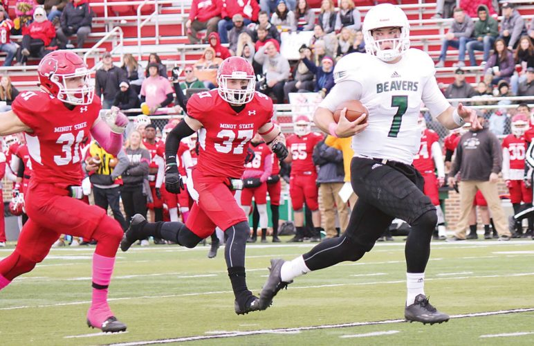 Alex Eisen/MDN Bemidji State quarterback Jordan Hein (7) takes off for a 42-yard touchdown in the first quarter Saturday afternoon against Minot State at Herb Parker Stadium.