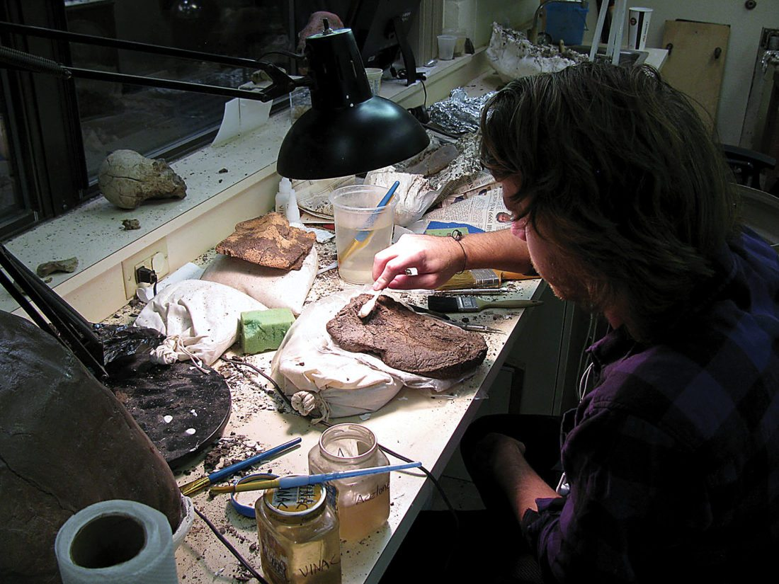Submitted Photo The armor of a nodosaur, a plant-eating dinosaur and rare fossil find, is being cleaned at the Badlands Dinosaur Museum in Dickinson.