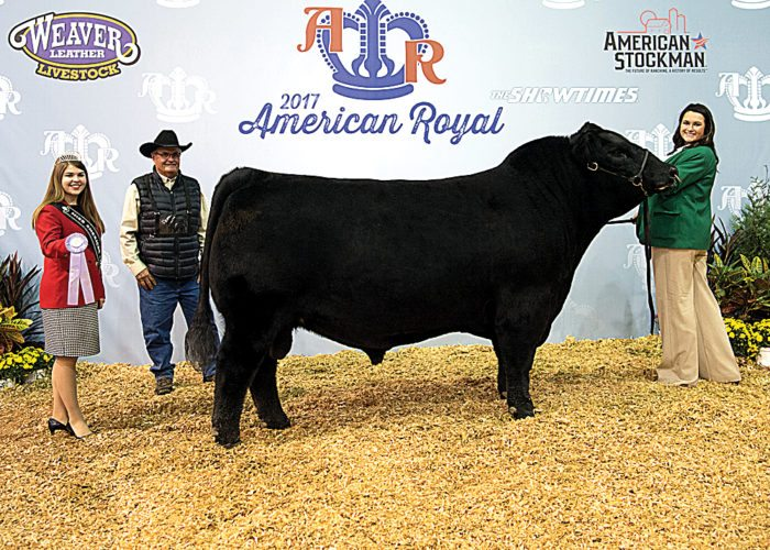 Submitted Photo 7/S Splash 415 won reserve senior champion bull at the 2017 American Royal Super Point Roll of Victory (ROV) Angus Show, Oct. 28 in Kansas City, Mo. Madison Sundsbak of Des Lacs and Krebs Ranch, Gordon, Neb., own the winning bull.