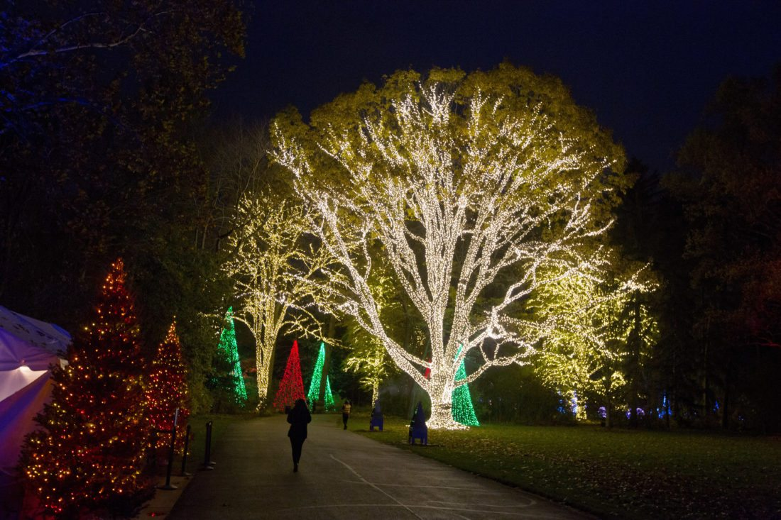 Trees, lights, holiday magic: Christmas events and displays | News ...