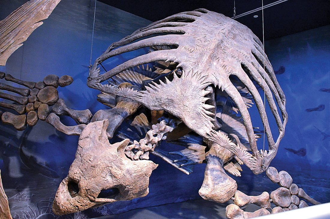 Eloise Ogden/MDN The archelon, a 12-foot-long giant sea turtle, lived millions of years ago in what is now North Dakota. It is displayed in the Geologic Time Gallery in the North Dakota Heritage Center and State Museum.