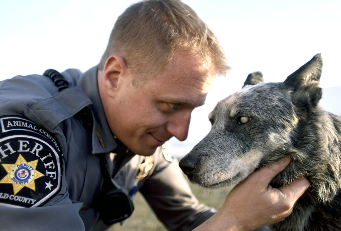 Animal control officer adopts blind blue heeler News Sports Jobs