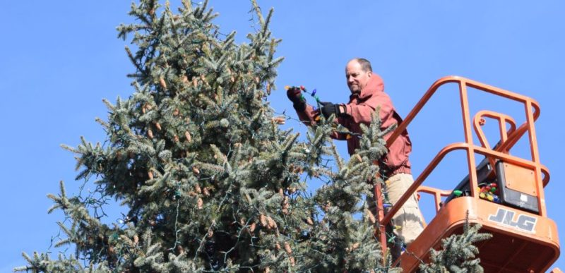Mike Fisher, co-owner of A Yard Apart, adds a string of colorful LED lights to the tree that will be the centerpiece of Friday's Christmas on Broadway lighting event. (Photo by Lisa M. Esquivel Long of News-Sentinel.com)