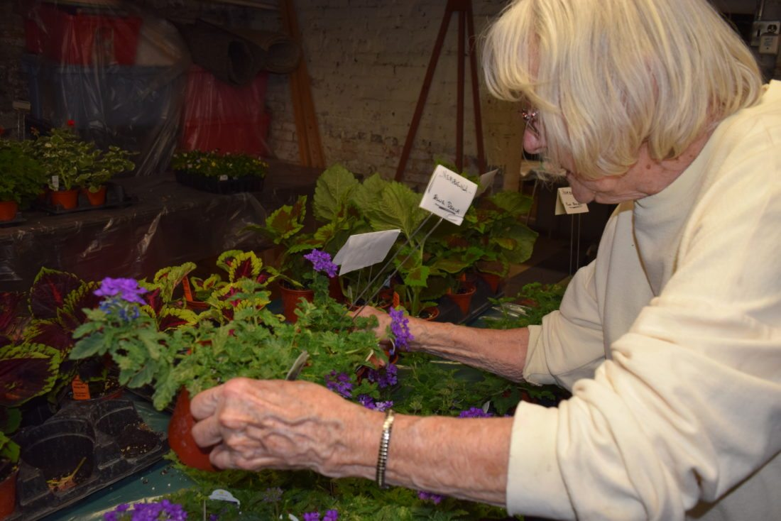Fort Wayne spring plant sales ready to help you brighten up your ...