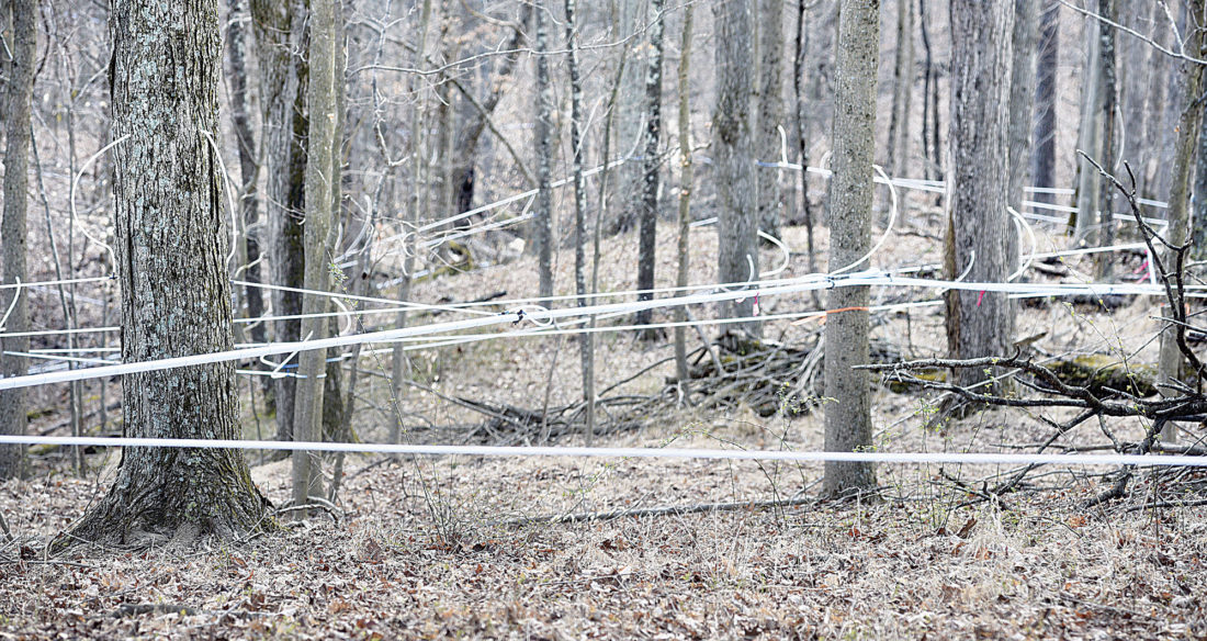 Photo by Jeff Baughan Trees along the farm contain sap lines. Though the warm weather ended collection this year, they will be ready for next year.