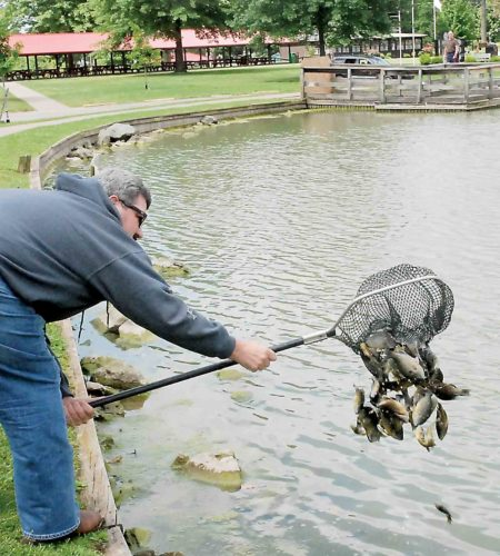 Parkersburg Mayor Tom Joyce dumps a netful of hybrid bluegill into the City Park pond Friday. The City and Southwood Park ponds were stocked with catfish and hybrid bluegill delivered by Rainbowhead Farms near Clarksburg. (Photo by Evan Bevins)