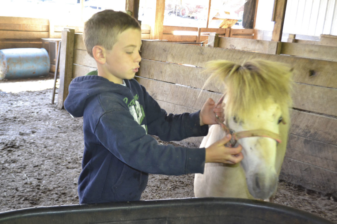 Photo by Peyton Neely Maddox Antill, 7, holds on to one of the miniature ponies that are used with the Pampered Pets Petting Farm at the Antill Farm near Beverly.